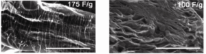 carbon nanotube-graphene composites